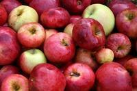 Les pommes de l'atelier jus de pommes