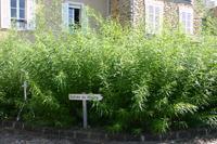 Le salicetum du musée de la  Seine-et-Marne