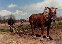 Cheval de trait en Seine-et-Marne