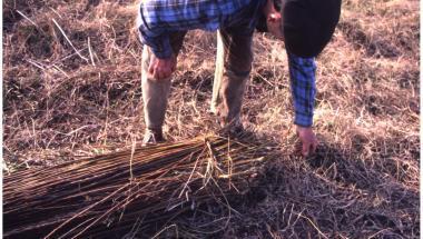 De l'osier à la vannerie dans la vallée du Petit-Morin