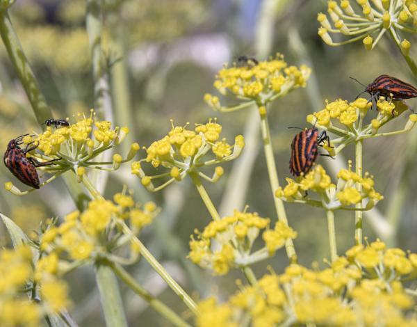 Gros plan d'insectes sur des fleurs jaunes dans le jardin du musée.