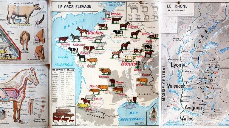 Montage composé d'affiches d'école utilisées dans les années 1950-19. Les affiches représentent les régions d'élevage de vaches et de chevaux, l'anatomie du cheval, la configuration d'une étable et différentes races de vache et la région Rhône-Alpes